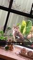 Thumbnail of Bananas