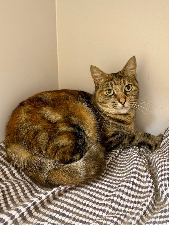 Image of Tabby