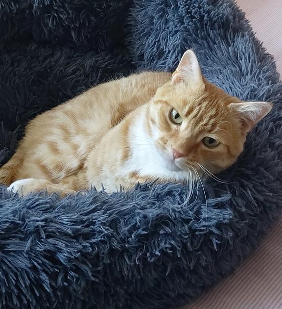 Image of Leo