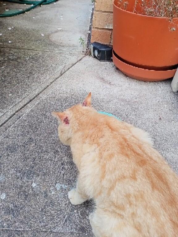 Image of Ginger Boy