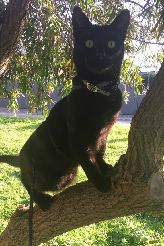 Image of Salem