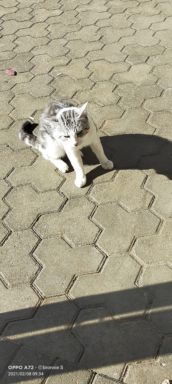 Image of Shadow