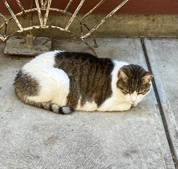 Image of Kitty