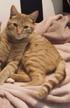 Thumbnail of Tiger