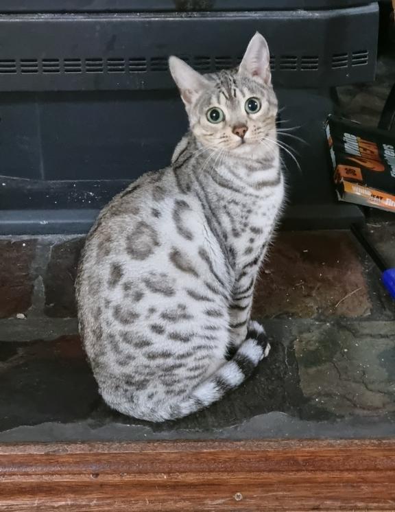 Image of Fifi