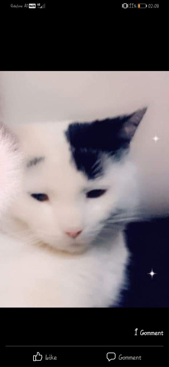 Image of Otis