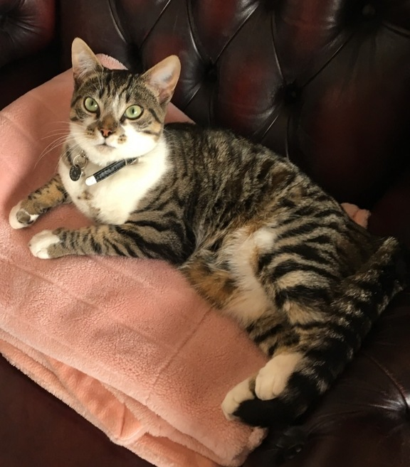 Image of Milo
