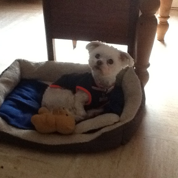Image of Millie
