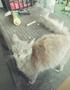 Thumbnail of Kitty